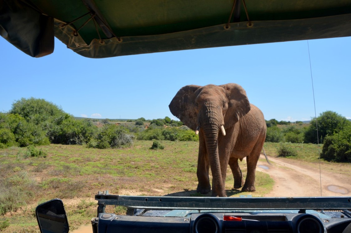 Big 5 wildlife conservation project in Zuid Afrika
